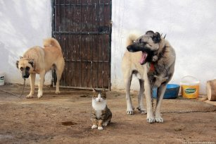 The dogs and cat in this village protect each other Turkey, 19 November 2018 [Sidar Can Eren/Anadolu Agency]