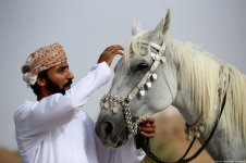 This rider looks after his horse after a long day of riding. Oman, 23 August 2018 [Photo by Francois Nel/Getty Images]