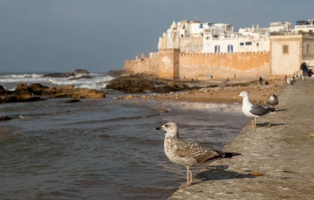 View of the historic Essaouira walled medina and Atlantic ocean with flock of seagulls flying on January 05, 2018 in Essaouira, Morocco. (Photo by Athanasios Gioumpasis/Getty Images)