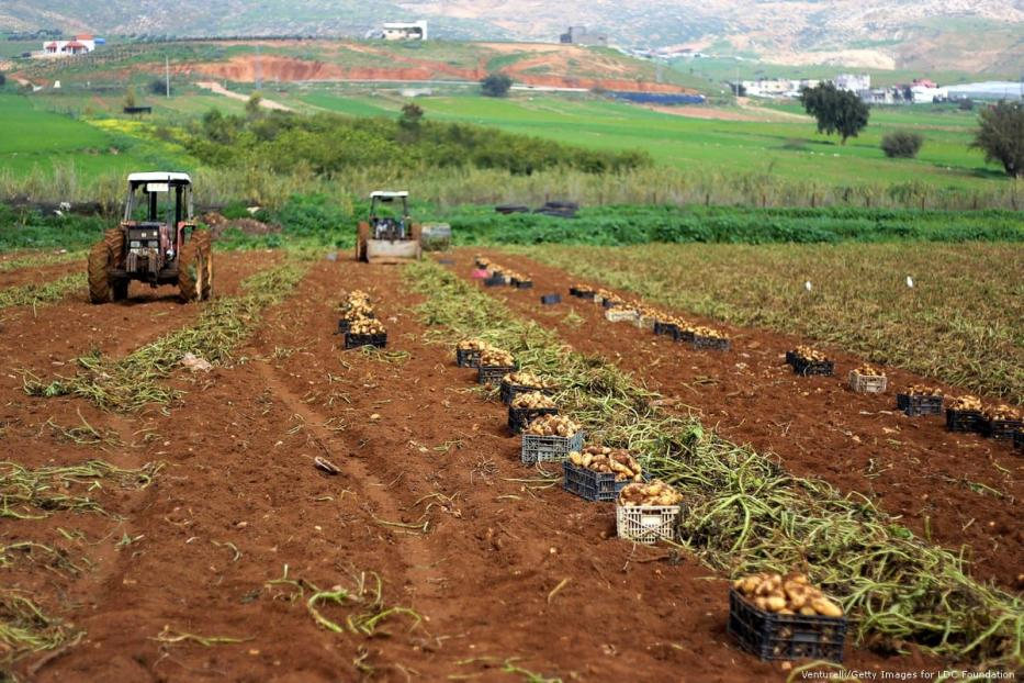 Palestinian farmers during harvest season in Jordan Valley on 19 January 2015 [Shadi Hatem/Apaimages