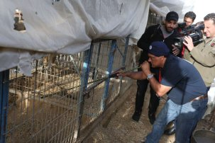 50 animals moved out of Gaza [Moahammed Asad/Middle East Monitor]