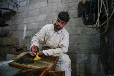 A Palestinian apiarist check honeycomb grills as they begin harvesting honey at at honey filling facility in Rafah, Gaza on April 29, 2019. [Mustafa Hassona - Anadolu Agency]