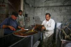 Palestinians apiarists check honeycomb grills as they begin harvesting honey at at honey filling facility in Rafah, Gaza on April 29, 2019. [Mustafa Hassona - Anadolu Agency]