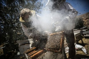 Palestinian apiarists keep bees in order to collect their honey as they begin harvesting honey at at honey filling facility in Rafah, Gaza on April 29, 2019. [Mustafa Hassona - Anadolu Agency]