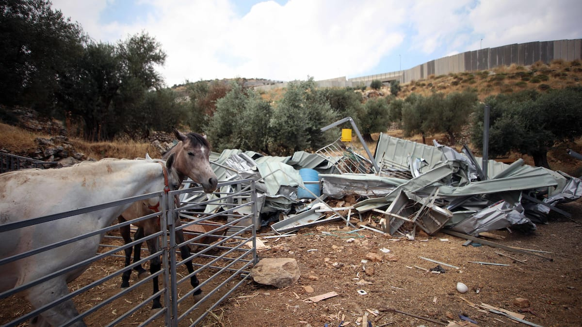 Palestinians inspect their animal barns following after the Israeli troops demolished it in the West Bank city of Bethlehem, June 13, 2019. [Abedalrahman Hassan - Apaimages]