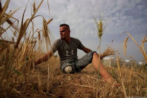 27-year-old Sohaib Qudeh, injured during the Gaza Great March of Return protests, seen on his family field in the southern Gaza city of Khan Younis, in June 2019 [Loai el-Agha / Middle East Monitor]