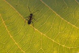 Close-up of an ant on a leaf in Van, Turkey on 29 July, 2019 [Özkan Bilgin/Anadolu Agency]