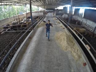 Livestock farmers in the Gaza Strip are grappling with a low demand for their produce as a result of Israel's continued siege of the enclave [Mohammed Asad/Middle East Monitor]
