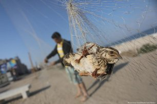 A net has been set up which acts as a wall to catch quails flying in from Europe in Gaza on 18 September 2019 [Mohammed Asad/Middle East Moni