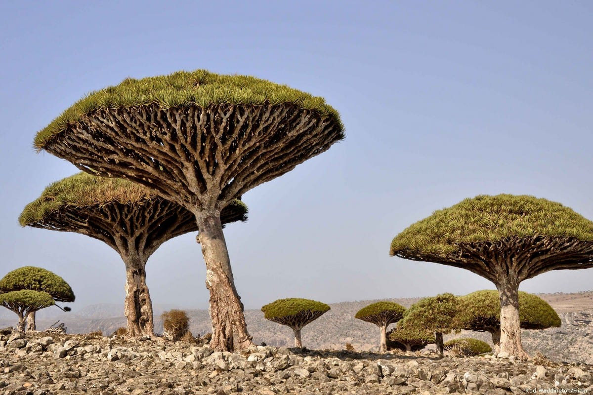 The Yemeni island of Socotra on 12 February 2014 [Rod Waddington/Flickr]