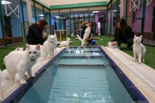 Cats are being pampered at a Cat Research and Application Center, in Van, Turkey on 22 October 2019 [Özkan Bilgin/Anadolu Agency]