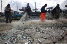 Sardines swamp Gaza on 10 February 2020 [Mohammed Asad/Middle East Monitor]