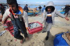 Sardines swamp Gaza on 10 February 2020 [Mohammed Asad/Middle East Monitor]