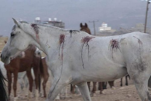 An injured horse is seen after Saudi Arabia carried out air strikes on horse stables in Sanaa, Yemen on 30 March 2020 []