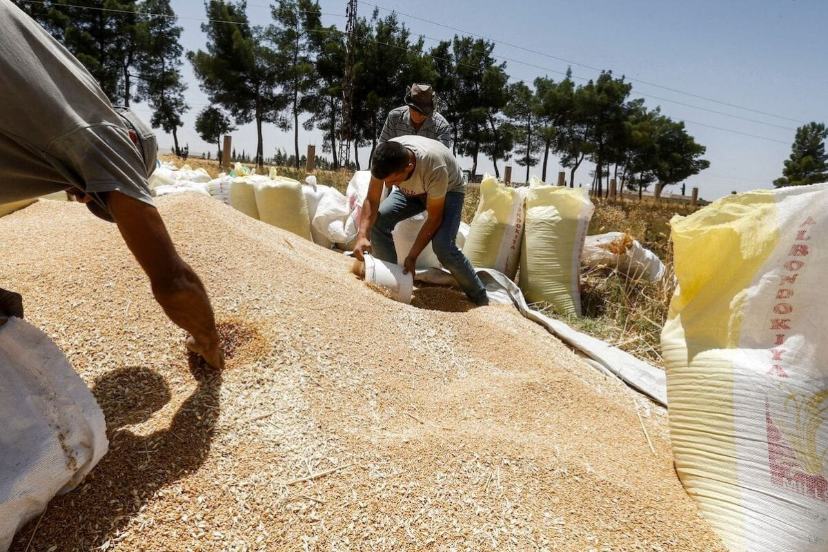 A farmer collects wheat kernels into a bucket before being poured into sacks during the harvest season, in a field in the countryside of al-Kaswa, south of Syria's capital Damascus, on 18 June 2020. [LOUAI BESHARA/AFP via Getty Images]