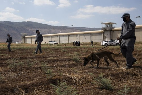Police officers search as they investigate an area where six Palestinian prisoners managed to escape from Gilboa prison overnight on September 6, 2021 near Kibbutz Beit HaShita in the Gilboa region, Israel. [Amir Levy/Getty Images]
