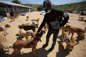 Rehabilitating Gaza's stray dogs, on 13 October 2021, in Gaza [Mohammed Asad/Middle East Monitor]
