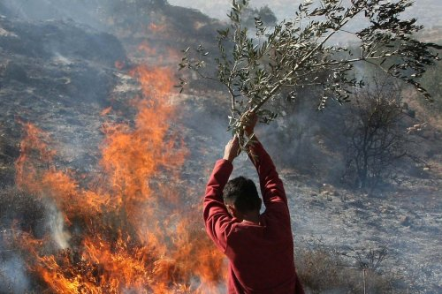 Palestinians extinguish fire at an olive tree grove that was allegedly set ablaze by Jewish settlers in the northern West Bank village of Salem, east of Nablus, on November 14, 2010 [JAAFAR ASHTIYEH/AFP via Getty Images]