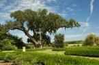 Sundial Garden and Middleton Oak