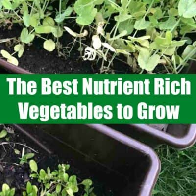 Best vegetables to grow. If you are looking to start a garden, you are in luck! These are the the best nutrient rich vegetables to grow! #gardening #vegetables #veggies #garden