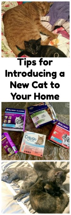 Tips for Introducing a New Cat to Your Home. If you are getting a new cat then these tips will help you introduce a new cat to your house. Using products like FELIWAY greatly help with cat stress and other things that go on when you are introducing a new cat to your house. #Cats #ad #Feliway #NewCat