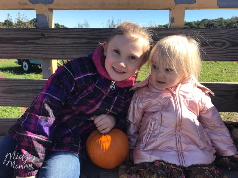 Kids at a pumpkin patch getting pumpkins to use when making pumpkin slime