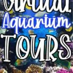 Virtual Aquarium Tours