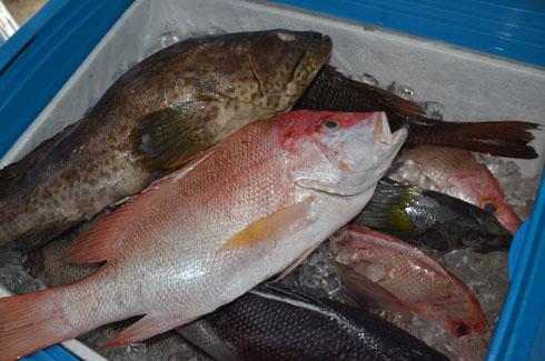 Produits de pêche : Consommation en légère baisse chez les Tananariviens