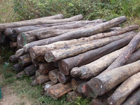 Sambava : « Bois de rose 4  camion » tratran'ny zandary