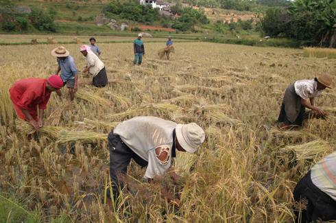 Priorités de l'Etat : L'économie rurale au bord de la faillite, TAFITA tire la sonnette d'alarme