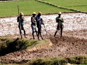 Une prédominance de l'agriculture familiale est constatée à Madagascar. (Photo d'archives)