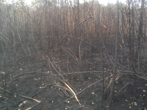 Parc national de la Baie de Baly à Soalala : 222 ha de forêts et des espèces protégées, partis en fumée !
