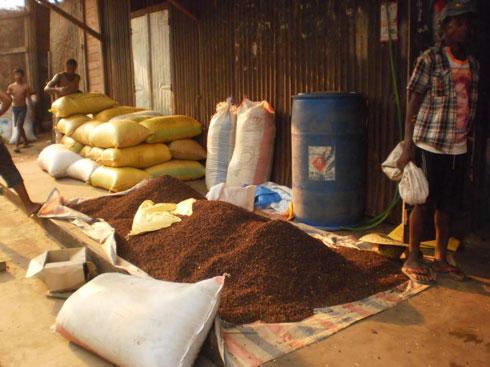 Filière girofle : Amélioration de la qualité de la production malgache