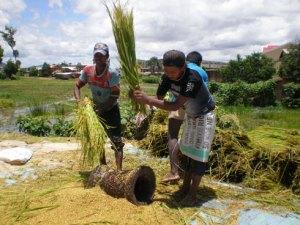 Une structuration des paysans s'impose dans le cadre d'une agriculture contractuelle. (Photo d'archives)
