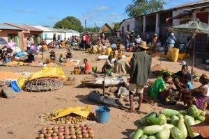 Le marché de Tsihombe où se vendent des fruits de cactus rouge qui ne sont pas encore mûrs.