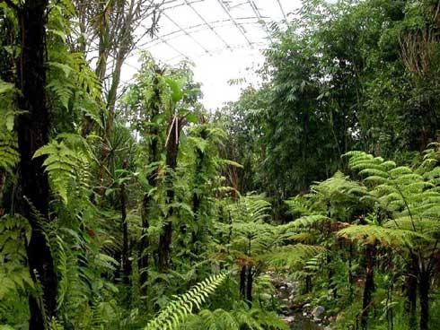 Biodiversité : Bilan mitigé, 25 ans après l'entrée en vigueur  de la Convention sur la diversité biologique