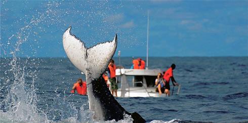 Festival des Baleines  : Sous le signe de la protection de l'environnement