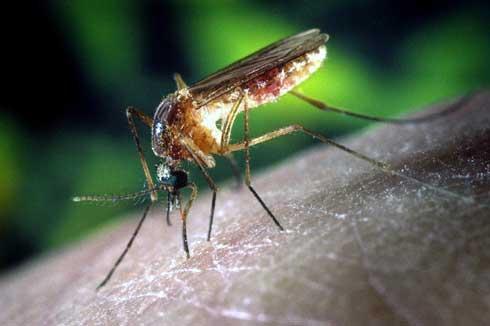 Epidémie de dengue : Environ deux mille cas, zéro décès