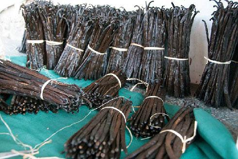Filière vanille : Le prix FOB minimum à l'export fixé à 250 USD/kg