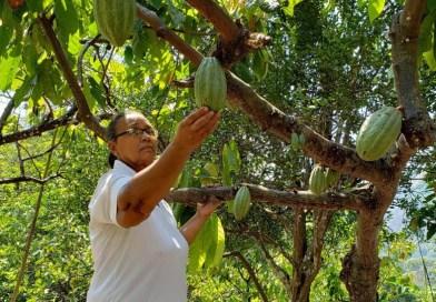 Mujer emprendedora del Cesar, luego de recuperar su predio vende cacao premium a la Compañía Nacional de Chocolates