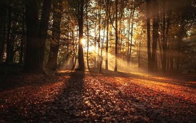 Balade d'automne exquise et pensive 1/3
