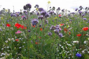 Lezing Natuurmonumenten: bloemrijke akkers en tuinen