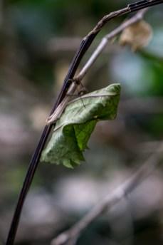 Malaysia-05188