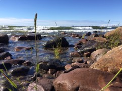 Midlife Sentence | Nature Walk and the Baltic Sea