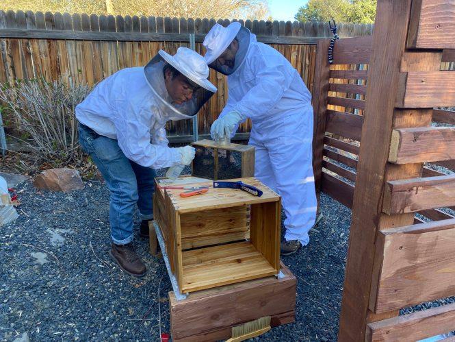 Midlife Sentence | bees