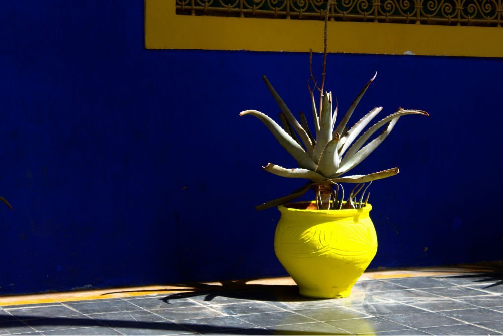 Jardin Majorelle Blue Oasis Marrakech The Midnight Blue Elephant