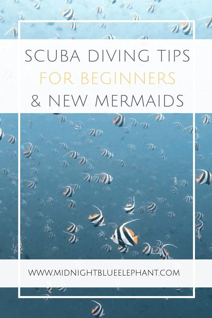 Do you have questions or concerns about scuba diving? I share scuba diving tips for beginners & answer some of the most common questions. Are you an open water diver or haven't dared to take the plunge yet? I answer questions on whether scuba diving is safe, what scuba gear a new diver should have & if sharks are really dangerous. If you have a scuba related question read on to find the answer!  #scuba #diving #scubadiving #scubatips #scubadiver #openwaterdiver #scubagear #diver #girlsthatscuba