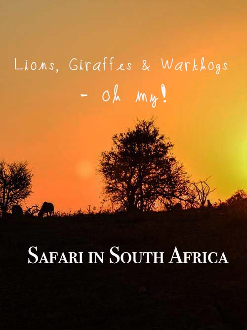 Looking for one of the best game reserves in KZN, South Africa? Follow me to Phinda for a luxury safari adventure in Africa - lion cubs and safari G&T included. #southafrica #gamereserve #safari #africa #durban #phinda #kwazulunatal #africasafari