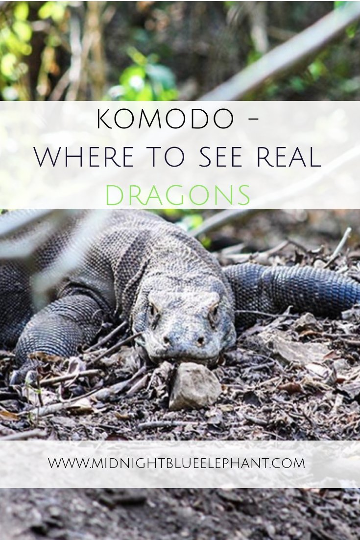 Want to see real dragons? Head to Pulau Komodo in Indonesia where you can get close with the last remaining Komodo dragons in the wild at the Komodo National Park. #komodo #komododragon #pulaukomodo #indonesia #flores #dragons #komodonationalpark
