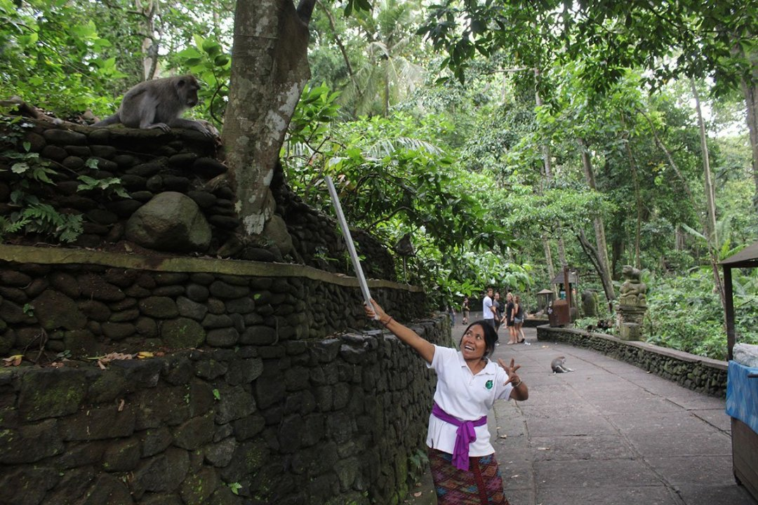 The monkey forest in Ubud is the place for monkey business in Bali. Here I share where to stay and how to make the most of a visit.